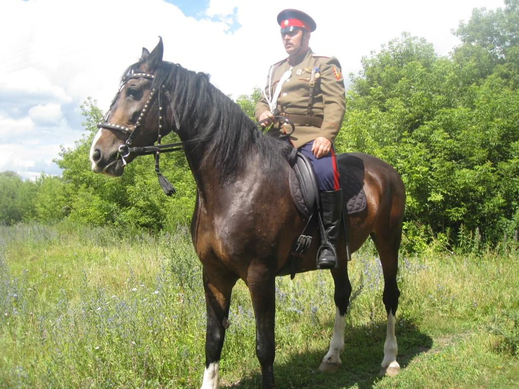 Наши казаки в г. Лев-Толстой