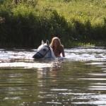 Плавание с лошадьми