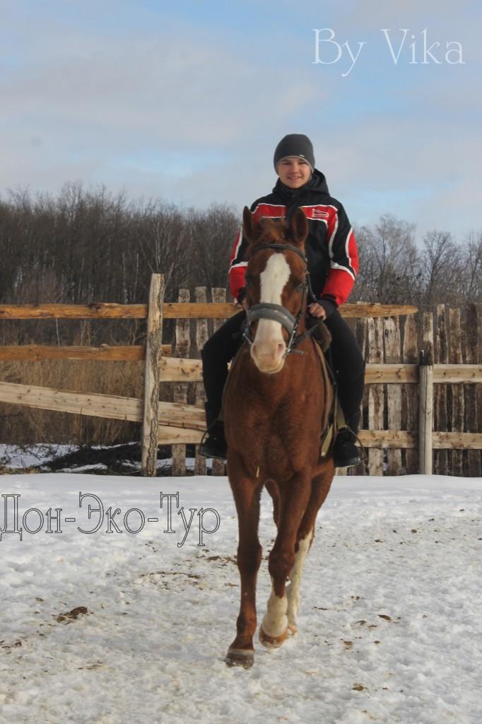 Зима, солнце,лошадь, КРАСОТА