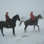 Зимние конные прогулки