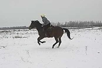 Галоп зимой
