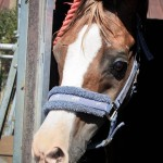 Витамин погружен. Вид из окошка коневоза