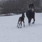 Малыш бегает за мамой